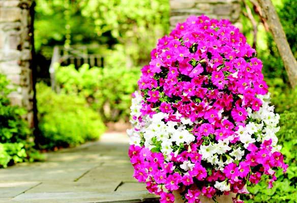 FlowerTower1