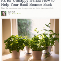 Faking a Green Thumb with HGTVGardens