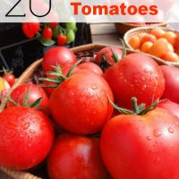 20 Ways to Use Tomatoes